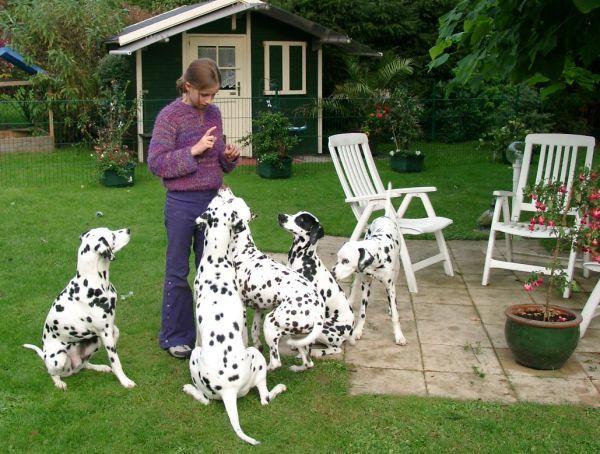geeignete familienhunderassen mit bildern